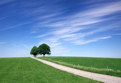 緑の丘と木々