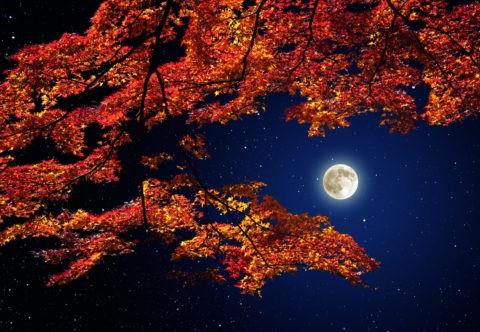紅葉の合間から見える星空と月