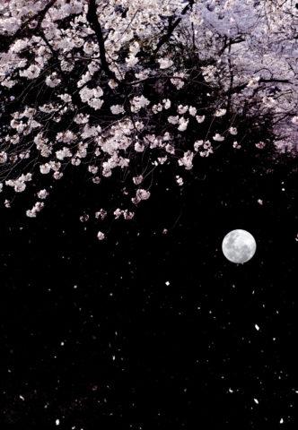 黒バックに桜と月の和風イメージ
