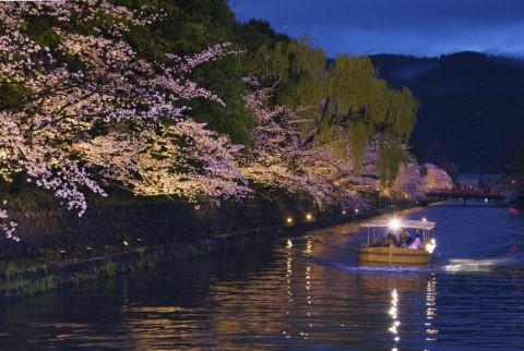 岡崎桜回廊舟めぐり