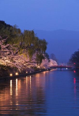 岡崎 夜桜