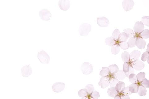 サクラの花と花びら