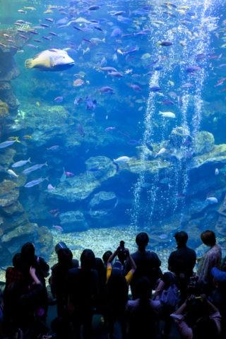 京都水族館 大水槽
