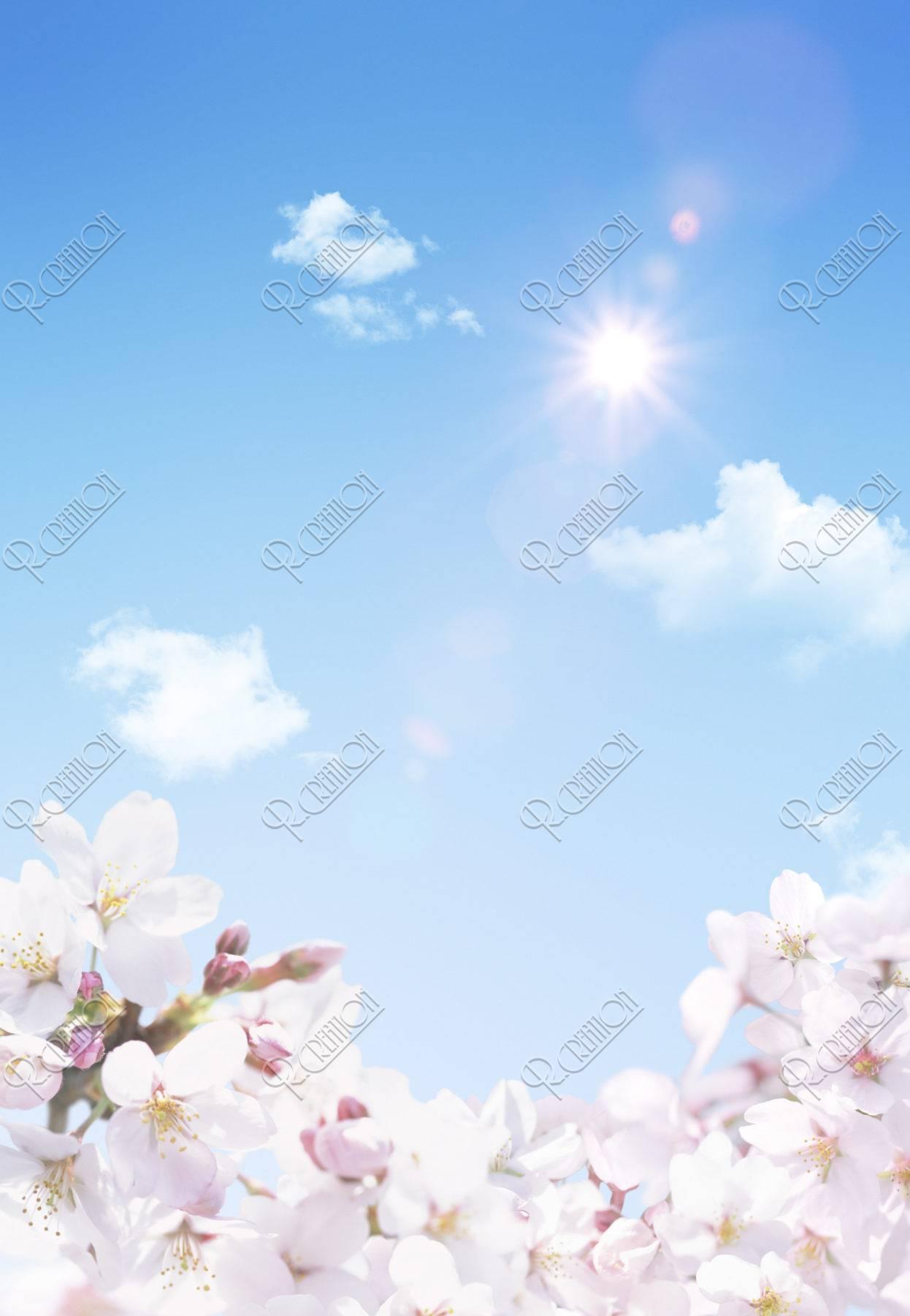 青空と桜に射す太陽の光