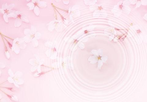 広がる波紋と桜の花