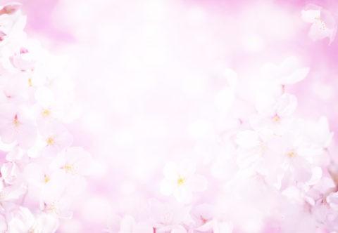 ピンクの光に包まれた桜のイメージ