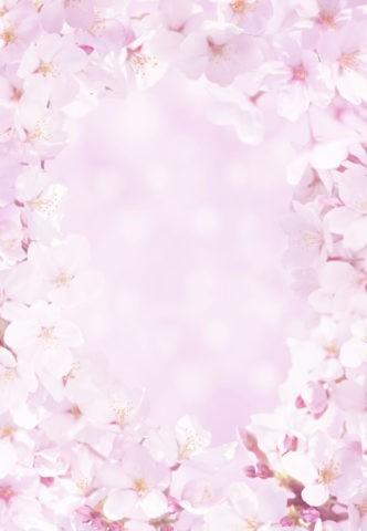 ピンクの桜のフレーム