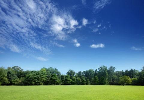 広がる芝生の向うに森とスジ雲