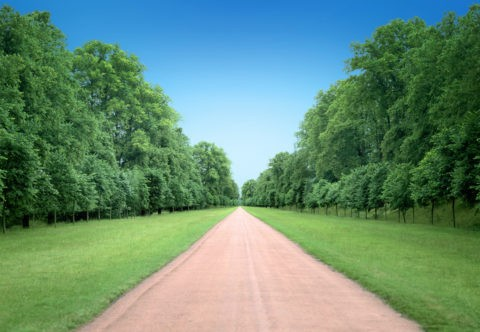 木立をまっすぐ抜ける一本の道