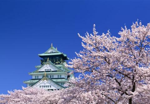 桜と青空に大阪城