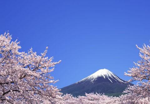桜と青空に富士山
