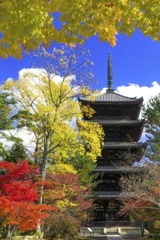 仁和寺 五重塔