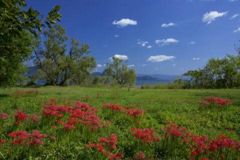 琵琶湖 今津桂浜