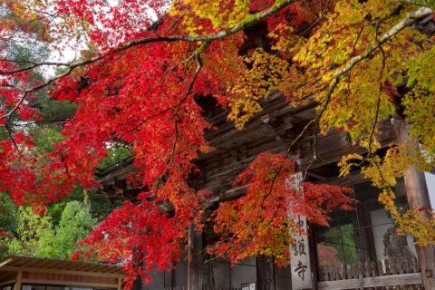 神護寺 紅葉