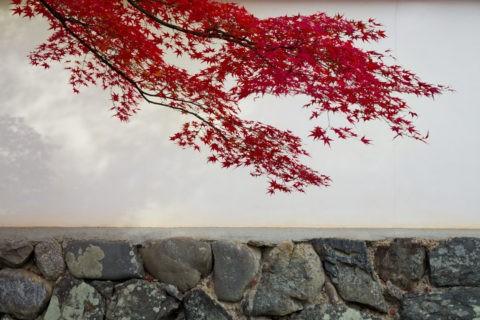 白壁 紅葉
