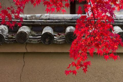 土壁 紅葉