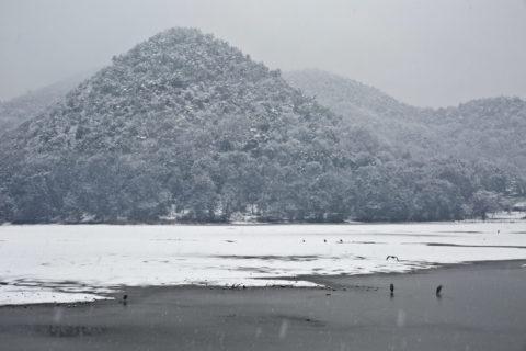 広沢池 遍照寺山