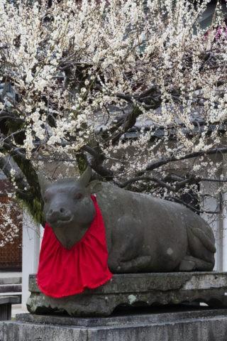 北野天満宮 牛