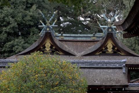 平野神社 右近橘
