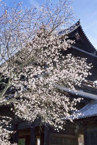 南禅寺 三門