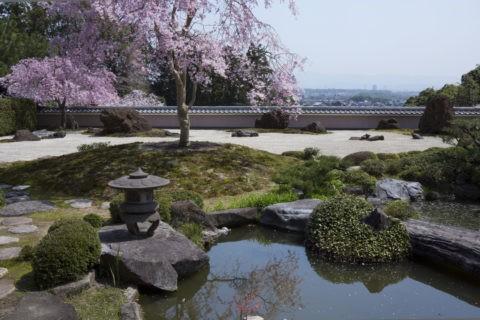 正法寺 桜