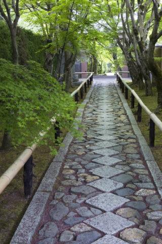 光悦寺 新緑