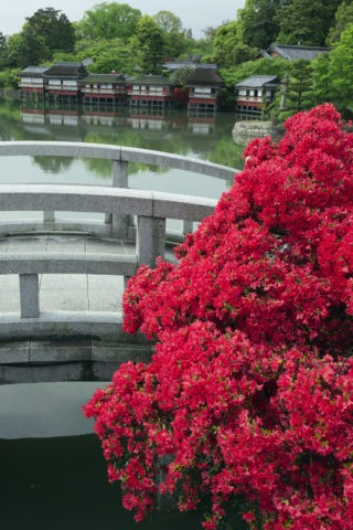 長岡八条ケ池 キリシマ
