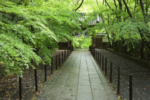 光明寺 新緑