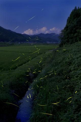 上林川 蛍