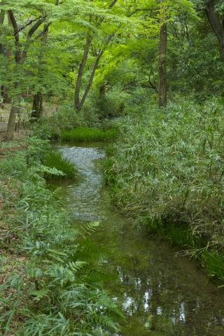 下鴨神社 泉川