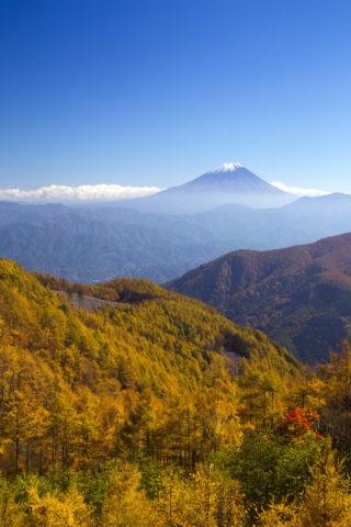 富士山とカラマツ