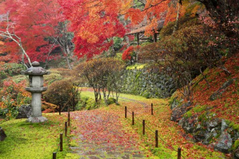 白龍園 紅葉