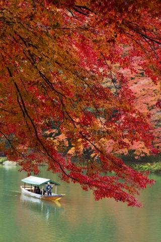 屋形船 紅葉