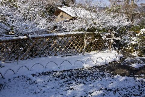 雪の光悦寺