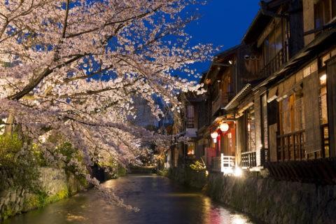 祇園白川 宵桜