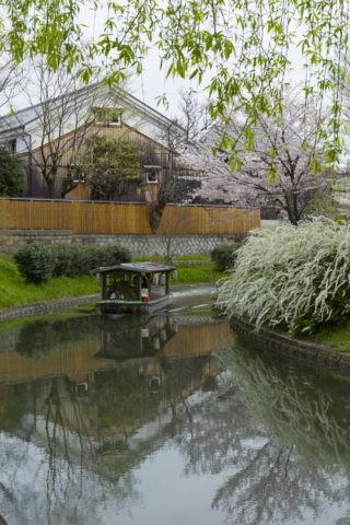 伏見酒蔵 桜