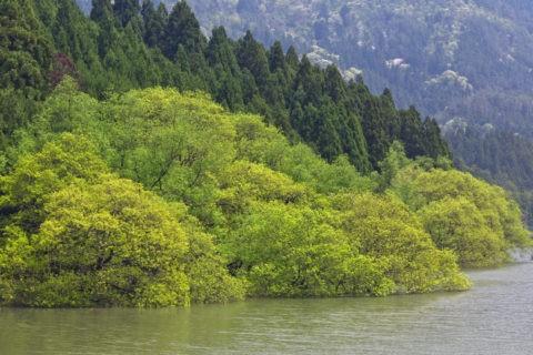 廻り田池 水没林