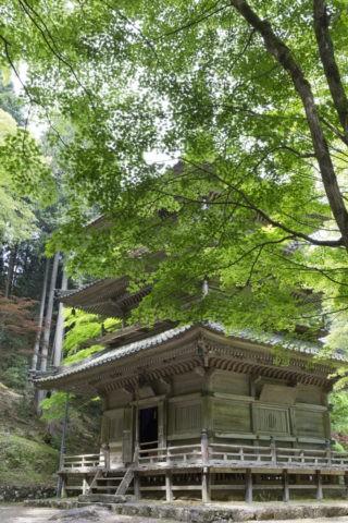 高源寺 新緑