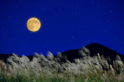 月とススキ