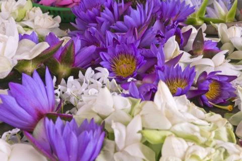アヌラーダプラ 献花