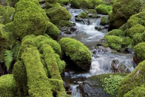 苔岩と流れ