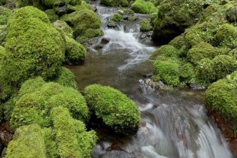 苔の岩と流れ