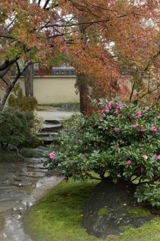 好古園 庭園