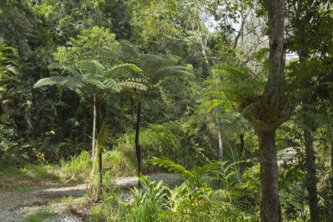 湿潤熱帯地域