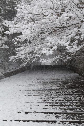 雪の光明寺参道