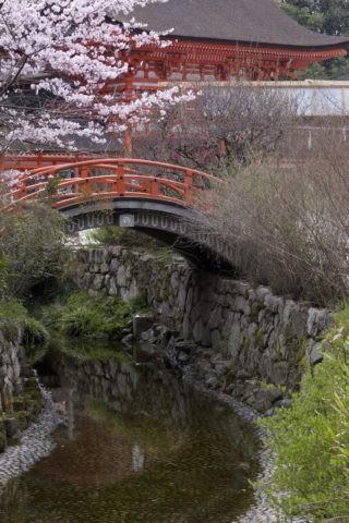 下鴨神社 桜