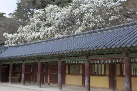 仏国寺 回廊