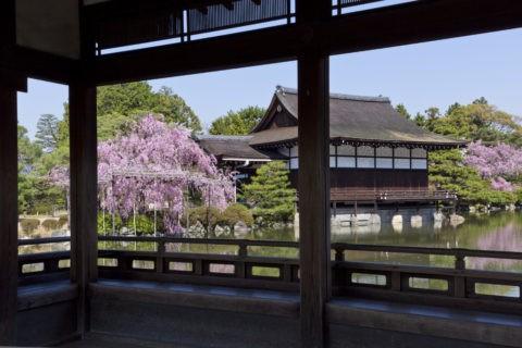 平安神宮 枝垂桜と貴賓館