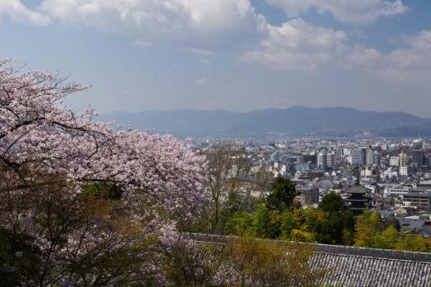 京都市内遠望 桜