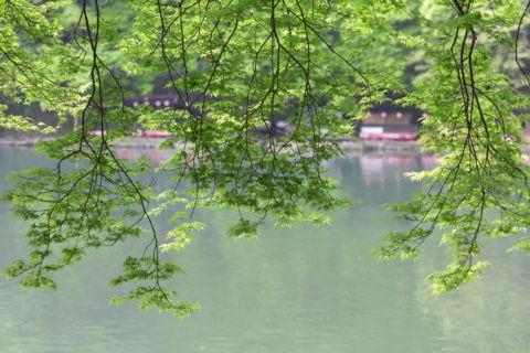 桂川と青葉
